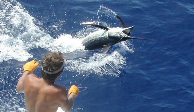 Photo gallery fishing for Deep water fish